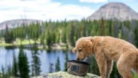 Coalatree.com The Hound Basin Keychain water bowl packs into practically nothing. It's lightweight and the ultimate convenience for any adventure with your pooch. The Hound Basin features a loop with […]